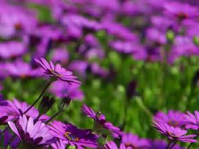 Gorgeous Purple flowers